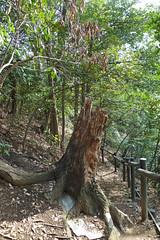 獅子ヶ谷市民の森(旭台通り)(Asahidai Ave., Shishigaya Community Woods)