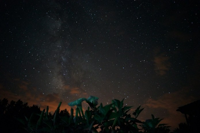 Datura and Milky Way