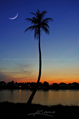 Coconut-Palm-Tree-Underneath-the-Crescent-Moon