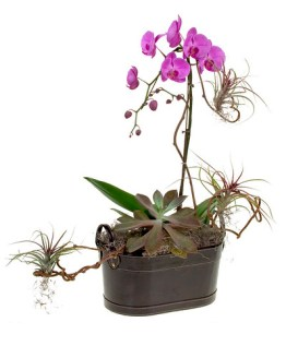 Orchid & Succulent Planter - Leanne and David Kesler, Floral Design Institute, Inc., in Portland, Ore.