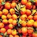 Clementiner på Hötorget. Fredag lunch.