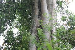 "Pendakian Sakuntala Gunung Argopuro Juni 2014 • <a style=""font-size:0.8em;"" href=""http://www.flickr.com/photos/24767572@N00/27093691691/"" target=""_blank"">View on Flickr</a>"