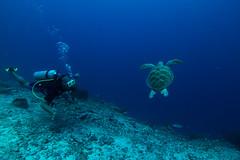 David Saidden with Turtle