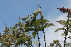 "Pendakian Sakuntala Gunung Argopuro Juni 2014 • <a style=""font-size:0.8em;"" href=""http://www.flickr.com/photos/24767572@N00/27066874752/"" target=""_blank"">View on Flickr</a>"