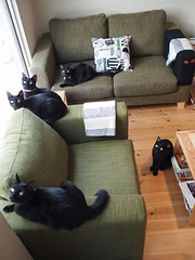 "Black cat cafe 1 • <a style=""font-size:0.8em;"" href=""http://www.flickr.com/photos/66379360@N02/10352119573/"" target=""_blank"">View on Flickr</a>"
