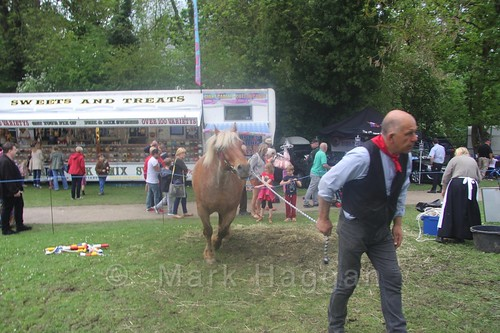 Shrek the horse goes for a walk at the Moira Canal Festival 2016