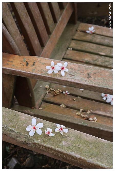 [桃園.旅遊]大溪.十一指古道~美麗油桐花覆蓋如白雪般 @VIVIYU小世界