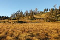 "Pendakian Sakuntala Gunung Argopuro Juni 2014 • <a style=""font-size:0.8em;"" href=""http://www.flickr.com/photos/24767572@N00/27066334732/"" target=""_blank"">View on Flickr</a>"