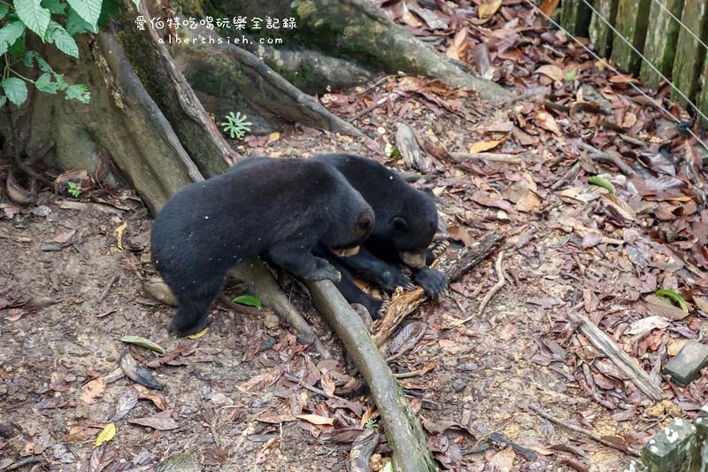 馬來西亞沙巴景點.山打根:馬來熊保育中心(跟臺灣黑熊一樣呆萌可愛) - 愛伯特吃喝玩樂全記錄