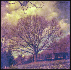 "tree • <a style=""font-size:0.8em;"" href=""http://www.flickr.com/photos/58574596@N06/12697938044/"" target=""_blank"">View on Flickr</a>"