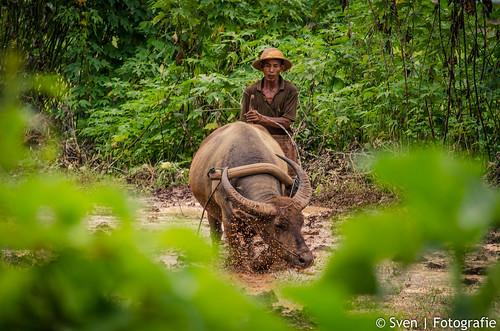 Traditional Farming in Myanmar