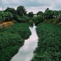 Day 460. Bananas, river, bananas, river, bananas, river. At least I know where my bananas come from now. #theworldwalk #travel #ecuador