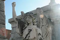 Dr Wm Nothacker angel