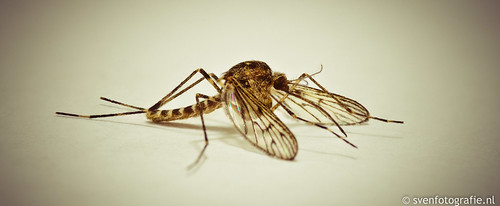 De eerste mug