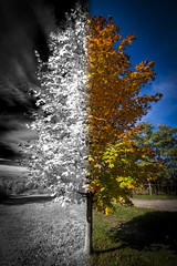 """Infrared vs Daylight • <a style=""""font-size:0.8em;"""" href=""""http://www.flickr.com/photos/65051383@N05/10110707406/"""" target=""""_blank"""">View on Flickr</a>"""