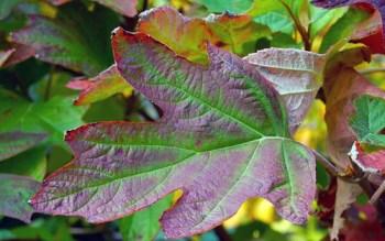 Fall Foliage — Photo by Sharon McGukin AAF, AIFD, PFCI