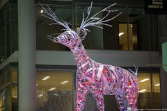 "Eaton Centre - Another Reindeer • <a style=""font-size:0.8em;"" href=""http://www.flickr.com/photos/65051383@N05/15988136192/"" target=""_blank"">View on Flickr</a>"