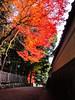 Photo:2014-11-30_IMGP1292.jpg By