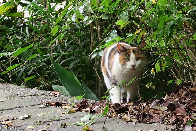 七里ヶ浜の猫
