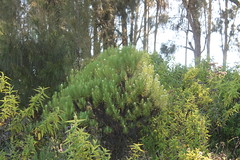 "Pendakian Sakuntala Gunung Argopuro Juni 2014 • <a style=""font-size:0.8em;"" href=""http://www.flickr.com/photos/24767572@N00/26555207874/"" target=""_blank"">View on Flickr</a>"