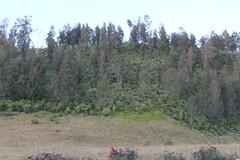 "Pendakian Sakuntala Gunung Argopuro Juni 2014 • <a style=""font-size:0.8em;"" href=""http://www.flickr.com/photos/24767572@N00/27128279246/"" target=""_blank"">View on Flickr</a>"