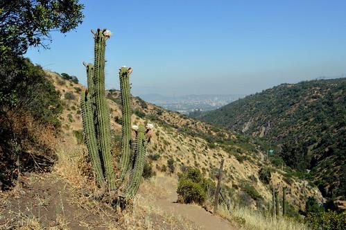 Cacti Overlook the Metropolis