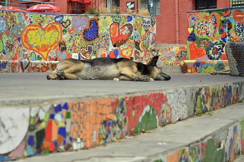 Mural Dog Mural