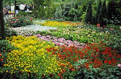 32-28-86 32 - Dutch Garden (1)