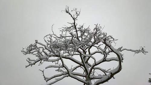 cameraphone winter snow tree finland nokia helsinki... (Photo: hugovk on Flickr)