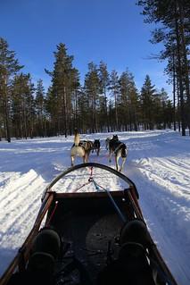 Husky ride