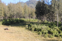 "Pendakian Sakuntala Gunung Argopuro Juni 2014 • <a style=""font-size:0.8em;"" href=""http://www.flickr.com/photos/24767572@N00/27161271965/"" target=""_blank"">View on Flickr</a>"