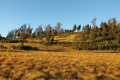 "Pendakian Sakuntala Gunung Argopuro Juni 2014 • <a style=""font-size:0.8em;"" href=""http://www.flickr.com/photos/24767572@N00/26887103270/"" target=""_blank"">View on Flickr</a>"