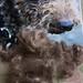 Mjukt - sista minnet av min hund.