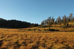 "Pendakian Sakuntala Gunung Argopuro Juni 2014 • <a style=""font-size:0.8em;"" href=""http://www.flickr.com/photos/24767572@N00/27092940271/"" target=""_blank"">View on Flickr</a>"