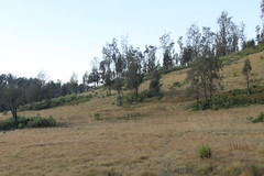 "Pendakian Sakuntala Gunung Argopuro Juni 2014 • <a style=""font-size:0.8em;"" href=""http://www.flickr.com/photos/24767572@N00/27093087841/"" target=""_blank"">View on Flickr</a>"