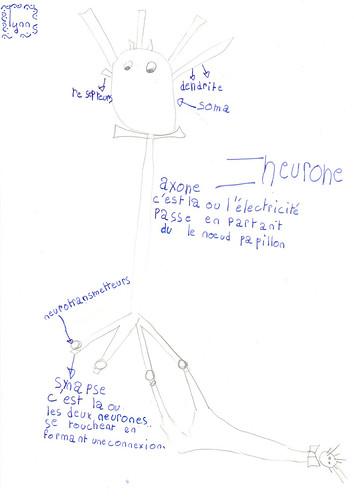 Schéma neurone & communication
