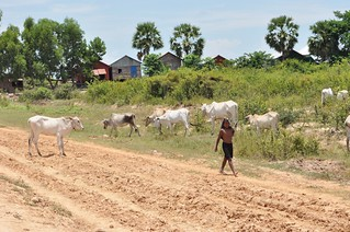 lac tonle sap - cambodge 2014 5