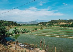 Day 466. Rice paddies leading into the oasis that is Macará. Oh, and the Reddit AMA is live! Ask me anything! #theworldwalk #travel #ecuador