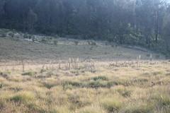 "Pendakian Sakuntala Gunung Argopuro Juni 2014 • <a style=""font-size:0.8em;"" href=""http://www.flickr.com/photos/24767572@N00/26555667974/"" target=""_blank"">View on Flickr</a>"