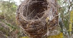"""Das Nest. Die Nester. Oder: Das Vogelnest. Die Vogelnester. Das Vogelnest ist auf dem Ast. • <a style=""""font-size:0.8em;"""" href=""""http://www.flickr.com/photos/42554185@N00/27594992392/"""" target=""""_blank"""">View on Flickr</a>"""