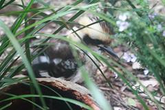 Sydney Aquarium and Wildlife