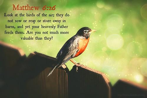 "Matthew 6:26 ~ Bird • <a style=""font-size:0.8em;"" href=""http://www.flickr.com/photos/95703371@N00/26856374386/"" target=""_blank"">View on Flickr</a>"