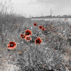Flowers amid the brush. On Rt. 12 south of Avon, NC. #TheWorldWalk #travel #flower #beach #obx #nc