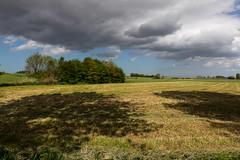 Flanders Fields
