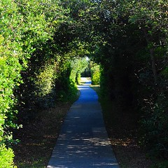 Winding path to hopefully somewhere I can set up camp for the night. #TheWorldWalk #travel #nc #obx