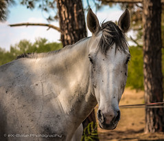 """Horse • <a style=""""font-size:0.8em;"""" href=""""http://www.flickr.com/photos/67597598@N08/26739691683/"""" target=""""_blank"""">View on Flickr</a>"""