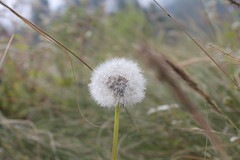 "Pendakian Sakuntala Gunung Argopuro Juni 2014 • <a style=""font-size:0.8em;"" href=""http://www.flickr.com/photos/24767572@N00/26555923884/"" target=""_blank"">View on Flickr</a>"