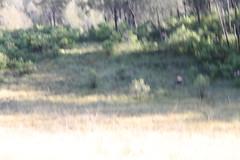 "Pendakian Sakuntala Gunung Argopuro Juni 2014 • <a style=""font-size:0.8em;"" href=""http://www.flickr.com/photos/24767572@N00/27127948836/"" target=""_blank"">View on Flickr</a>"
