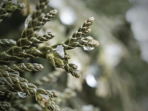Drops of Winter /A tél cseppjei