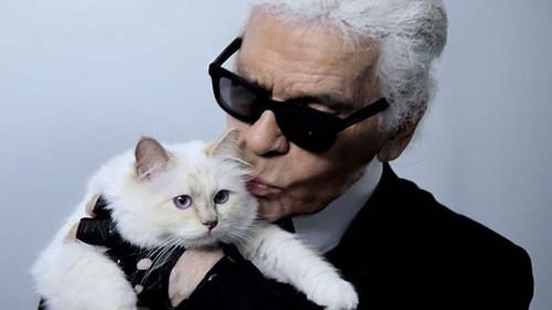 Com Shoupette, sua gatinha milionária